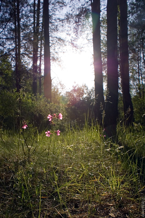 Во лесу