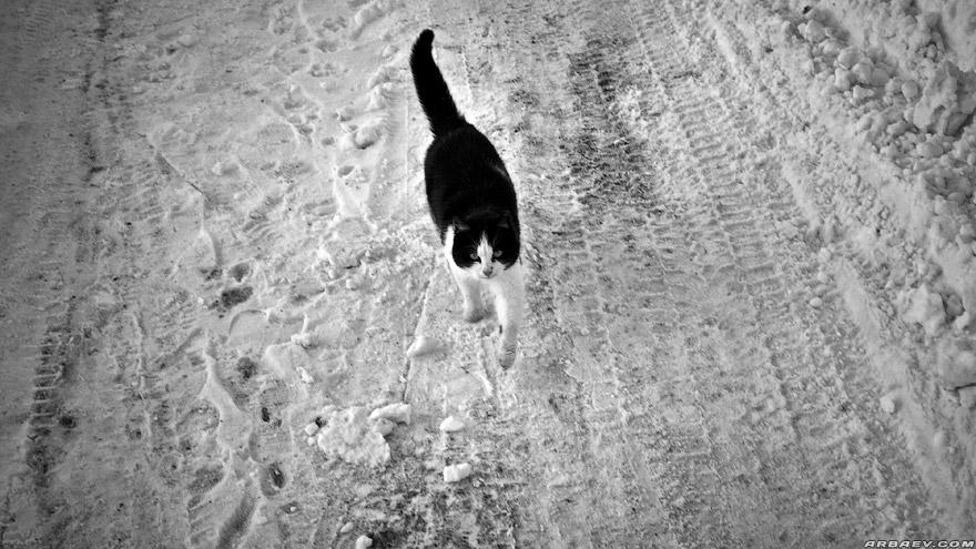 Снежно Котек