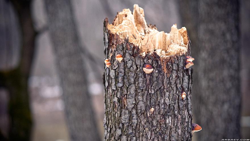 Зимние дерева