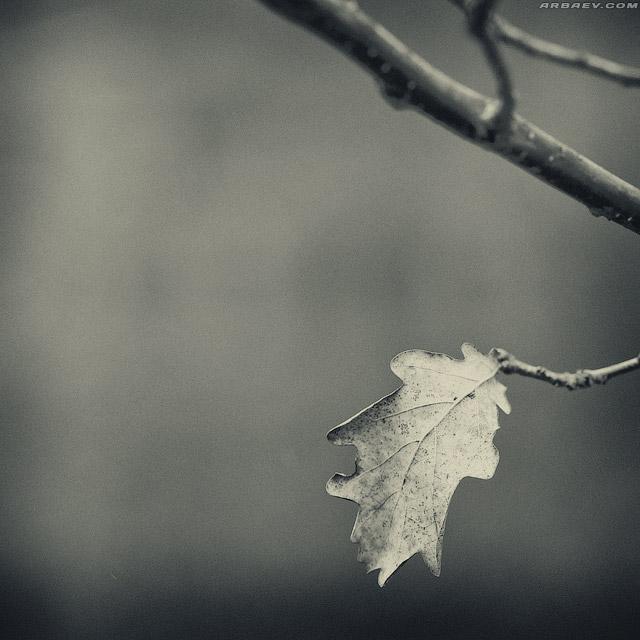 Осенний триптих 1