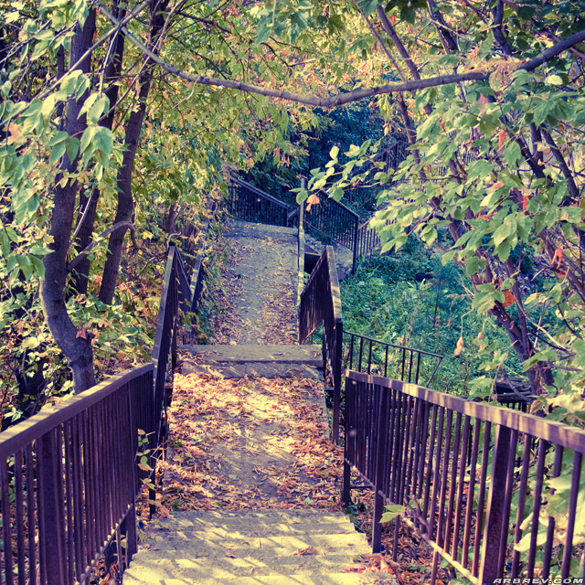 Лестница осенья