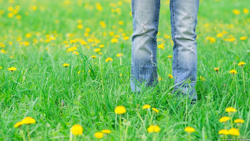 Одуванчиковое поле
