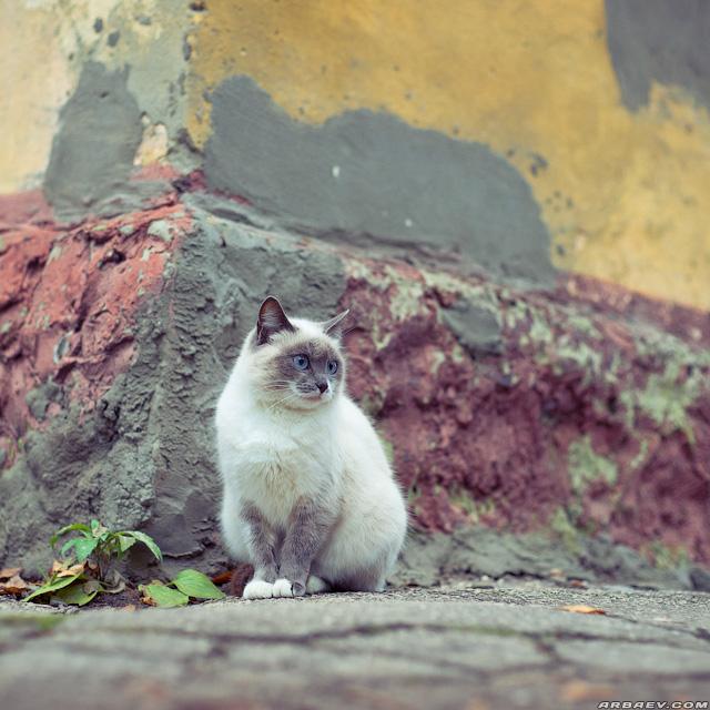 Пусть котик